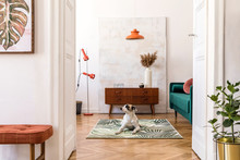 Stylish Compositon Of Retro Home Interior With Mock Up Poster Frame, Dog On The Carpet, Vintage Furnitures, Velvet Sofa, Design Lamps, Plants And Elegant Accessories. Nice Home Decor Of Living Rooms.