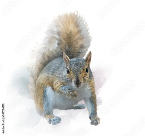 Fotomural  American gray squirrel on white background. watercolor painting.