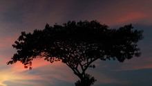 Silhouette Of A Tree At Sunset Time. Background Consist Of Beautiful Orange And Purple Moving Clouds In The Sky.