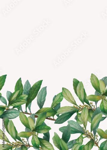 Green foliage framed banner Wall mural
