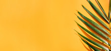 Palm Leaf With Hard Shadow On Yellow Summer Wall Background In Sunlight In Holiday Vacation.banner Copy Space For Display Of Design