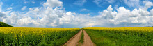 Road In Rield Of Yellow Rapeseed Against And Blue Sky
