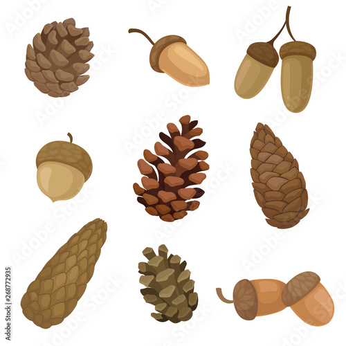 Collection of different images of acorns and cones Wallpaper Mural