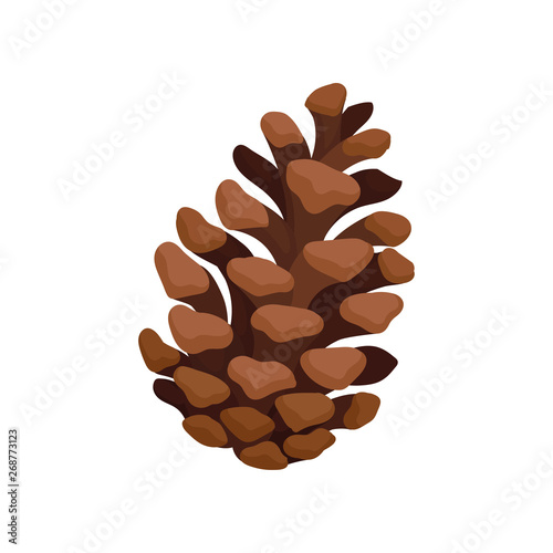 Obraz na plátně  Open fir cone. Vector illustration on white background.
