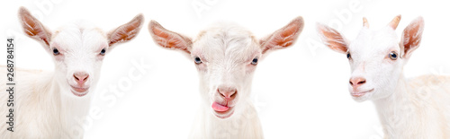 Portrait of a three funny goat isolated on white background Fototapete