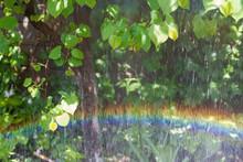 Rainbow Drops Of Foliage