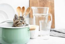 Cute Funny Kitten In Pot On Kitchen Table
