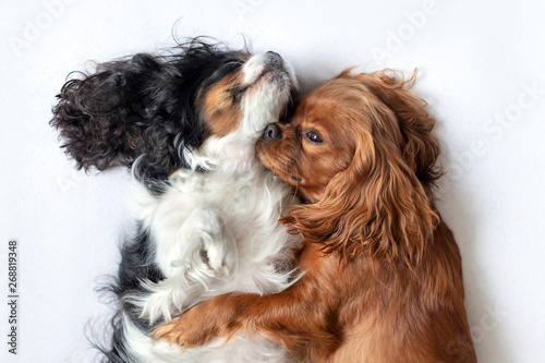 Two adorable dogs sleeping together Wallpaper Mural