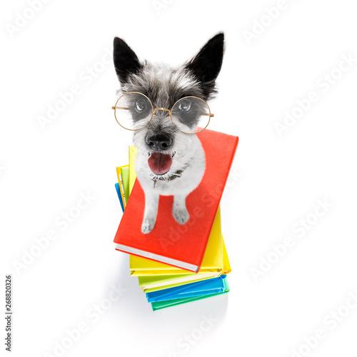 Cadres-photo bureau Chien de Crazy smart dog and books