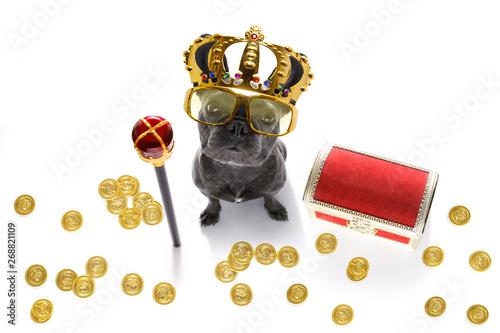 Cadres-photo bureau Chien de Crazy king rich money dog
