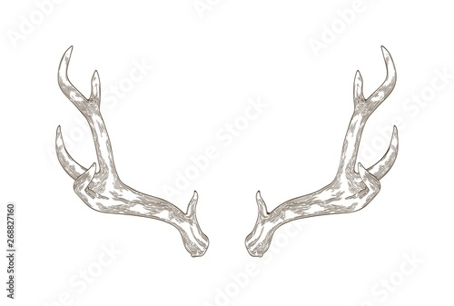 Fotografie, Tablou Monochrome drawing of deer, stag or hart antlers isolated on white background