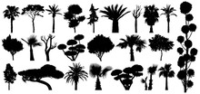 Set Of Subtropical Trees And Shrubs. Isolated Vector Silhouette On A White Background