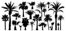 Palm Tropical Trees Silhouette...