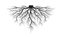 Root Of The Tree. Black Silhouette. Vector Illustration.