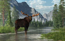 A Bull Moose Stands In The Ankle Deep Waters Of A Shallow, Lazy River That Winds Its Way Through A Forested Valley.  Fir Trees And Long Grass Line The Banks Of The Rivers. 3D Rendering
