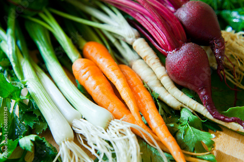 Obraz na plátně  Healthy fresh vegetables from organic farm -  ingredients food market: beetroot, carrots, parsnips, parsley root, celeriac, leek and onions with chive, with fresh dill herb -  spring vegetable soup