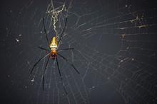 Spider On Spider Web With Natu...