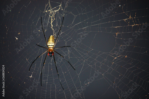 Canvastavla Spider on spider web with natural green background