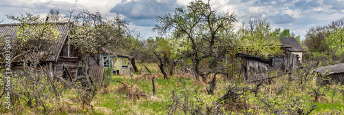 Fotografie, Obraz  Houses overgrown with bushes and trees in an abandoned village in Chernobyl excl