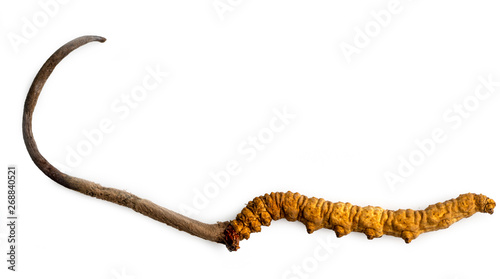 Valokuva  cordycepe sinensis (CHONG CAO, DONG CHONG XIA CAO) or mushroom cordyceps this is a herbs on isolated background