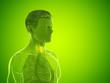 Leinwandbild Motiv 3d rendered medically accurate illustration of a mans thyroid gland