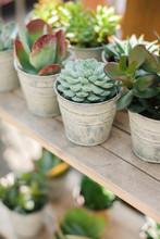 Pots With Various Succulents