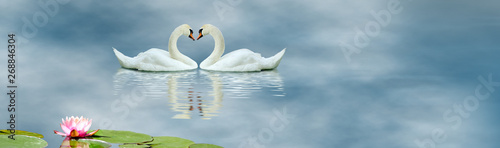 Fotografie, Obraz image of swans and lotus flower on the water