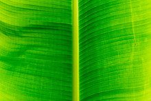Detail Of A Green Leave