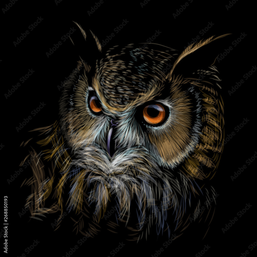 Fototapety, obrazy: Long-eared Owl. Color graphic hand-drawn portrait of an owl on a black background.