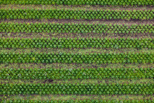 A Large Green Plantation From ...