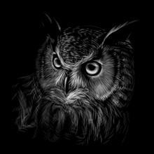 Long-eared Owl. Black And Whit...