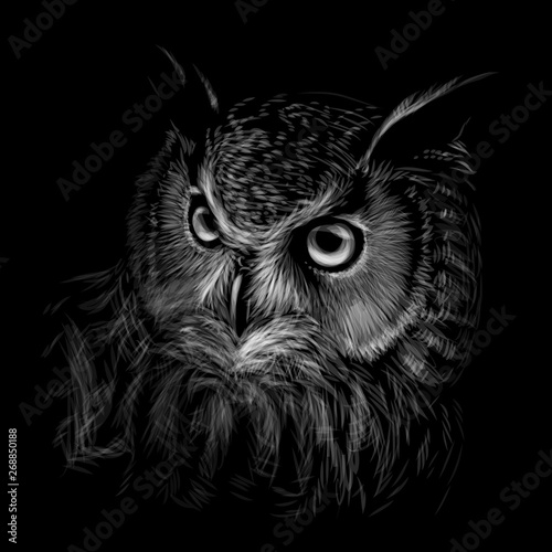 Spoed Foto op Canvas Uilen cartoon Long-eared Owl. Black and white graphic hand-drawn portrait of an owl on a black background