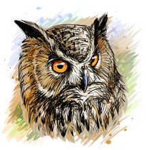 Long-eared Owl. Sketchy, Color...