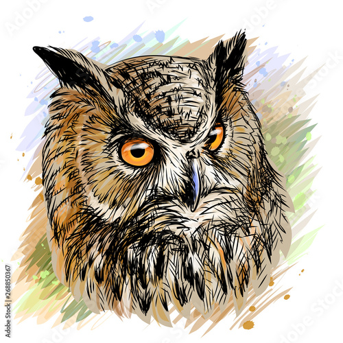 Long-eared Owl. Sketchy, colored hand-drawn portrait of an owl on a white background in watercolor style.