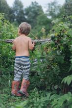 Little Boy Picking Berries