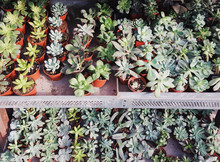 Shades Of Green Succulents For Sale.