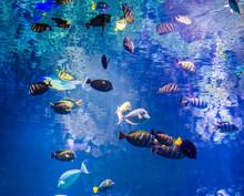 Marine Life Background, Shoal ...