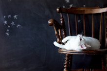 White Cat Lying Down On A Vintage Wooden Chair