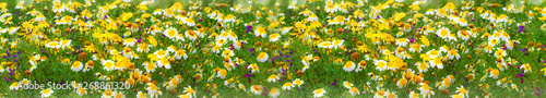 Fotografie, Obraz  fondo de flores de colores y plantas verdes