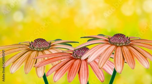 Obraz na plátně  flores con un fondo con bokeh