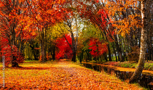 Cadres-photo bureau Marron Autumn landscape beautiful colored trees over the river, glowing in sunlight. wonderful picturesque background. color in nature. gorgeous view