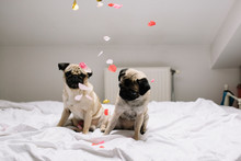 Dogs And Confetti