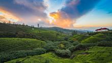 Sunset In The Tea Field Mountains In Sri Lanka