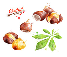 Watercolor Illustration Of Chestnut