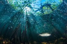 Mangrove Seascape