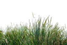 Green Grass On White Backgroud