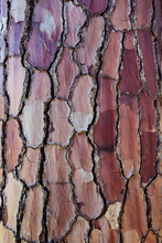 Close Up Of Interesting Texture Bark On A Tree Trunk