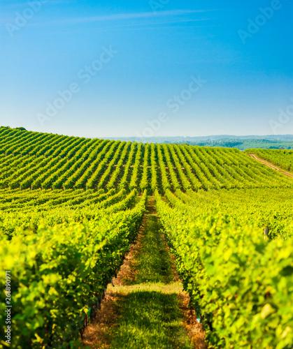 Photo sur Aluminium Vignoble wineyard near Villany in Hungary