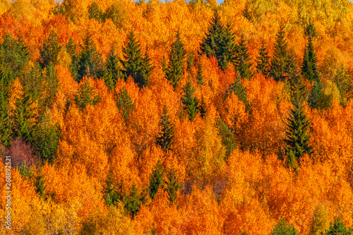 Cadres-photo bureau Automne View of trees of the autumn wood from above