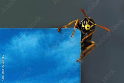 The wasp sits on the edge of the photo. This can be a place for a headline or an advertisement.